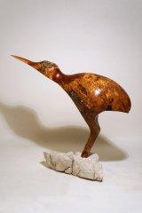 Kiwi-Ibis