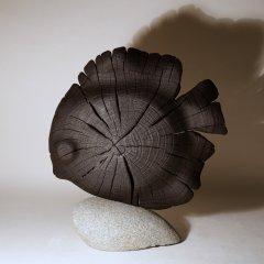 Black Discus